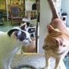Corraling Cats