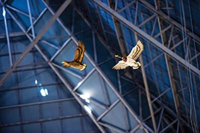 Duck decor overhead