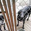 Four Dogs Saved from Death Row at Memphis Animal Services