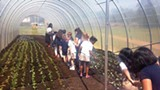 DENA L. OWENS - Grahamwood students check out their garden.