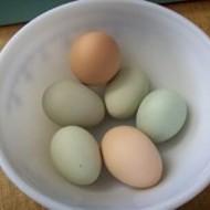 Green Eggs Sans Ham