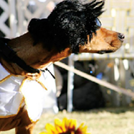 Harbor Town Dog Show Eats, and more