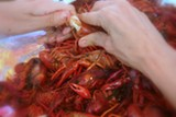 IMAGE: CANJUNCRAWFISHPIE.COM - Hungry for crawfish?