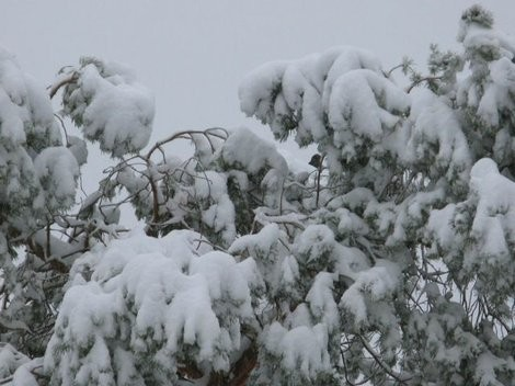 Icy tree limbs may cause problems for power lines today.