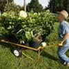 lichterman plant sale