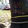 Treed Off