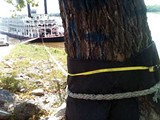 Low water is forcing the American Queen to tie up to trees in Greenbelt Park.