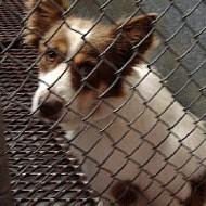 Memphis Animal Coalition Meeting Sunday