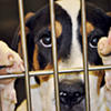 Memphis Animal Services Enforces Policy Banning Photographs of Certain Animals