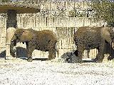 Memphis Zoo - 1st Place - Best Family Entertainment - JUSTIN FOX BURKS