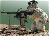 squirrel8sb_jpg-magnum.jpg