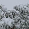 Most Memphis Utility Customers Have Power Despite Snow