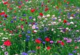 wildflowers_snap.jpg