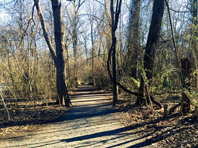 Overton Park's Old Forest - BIANCA PHILLIPS