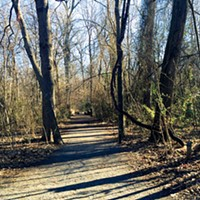 Overton Park's Old Forest