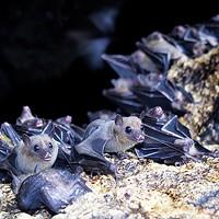 Residents of the East Buntyn neighborhood are building bat houses.