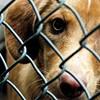 Respiratory Disease Outbreak at Memphis Animal Services
