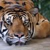 Rice 28, Tigers 6