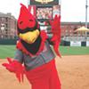 Rockey the Redbird Attacked