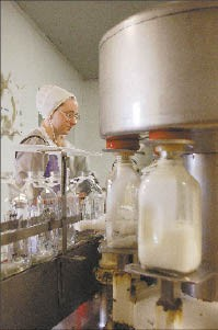 Roger Stolzfus' daughter at work at Rock Springs Dairy