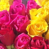 assorted-roses.jpg.pagespeed.ce.3xzvdtbizx.jpg