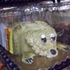 Sad Puppy Cake Contest