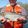 Shad Death at Shelby Farms