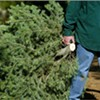 Shelby County To Open Christmas Tree Recycling Center