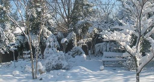 snow_snap.jpg