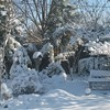 snowy nights botanic garden