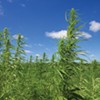 Tennessee Becomes the 16th State to Legalize Hemp