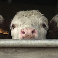 "Tennessee's ""Ag Gag"" Bill Passes"
