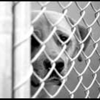 The Memphis Animal Shelter, with more than 150 kennels and 200 cages, runs at 100 percent capacity most of the year.