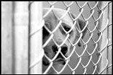 PHOTOS BY ROBIN SALANT - The Memphis Animal Shelter, with more than 150 kennels and 200 cages, runs at 100 percent capacity most of the year.