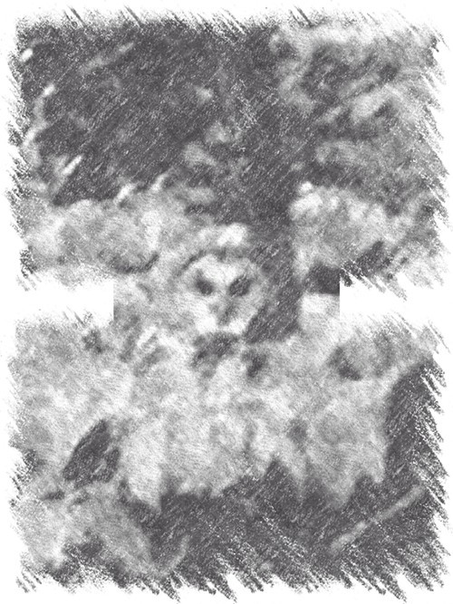 The Memphis Murder Owl, an artists depiction.