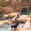 The Zoo's Expensive Free Day Problem