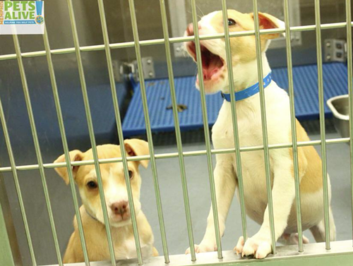 These puppies were photographed by Memphis Pets Alive last Tuesday.