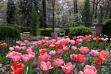 8d76f2e1_dixon_gallery_and_gardens-_tulips.jpg