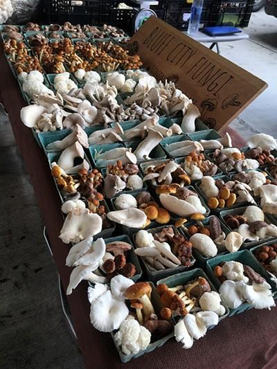 Fungus among us: Bluff City Fungi