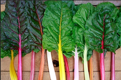 Chard from Rose Creek