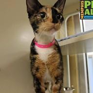 Memphis Pets of the Week (Feb. 8-14)