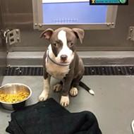Memphis Pets of the Week (Feb. 15-21)