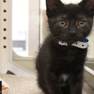 Memphis Pets of the Week (May 31-June 6)