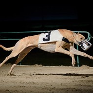 Greyhound Racing to End in West Memphis