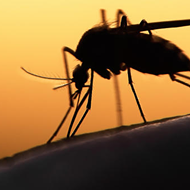 Shelby County Confirms Fourth Case of Zika Virus