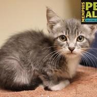 Memphis Pets of the Week (Nov. 24-30)