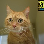 Memphis Pets of the Week (Feb. 9-15)