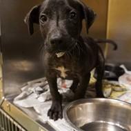 Memphis Pets of the Week (May 4-10)