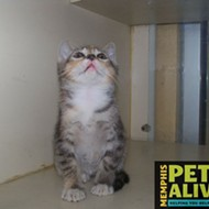 Memphis Pets of the Week (May 11-17)