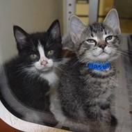 Memphis Pets of the Week (May 18-24)